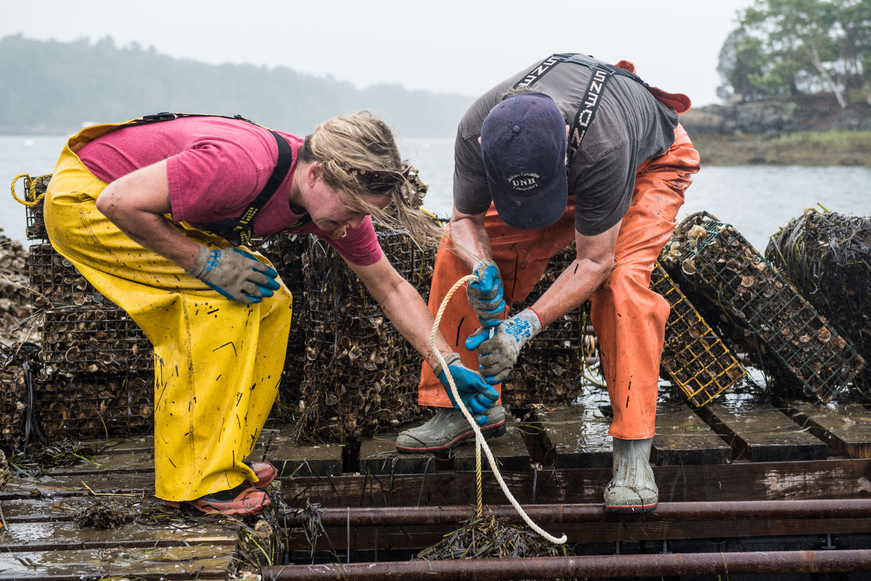 Pulling cages full of oysters