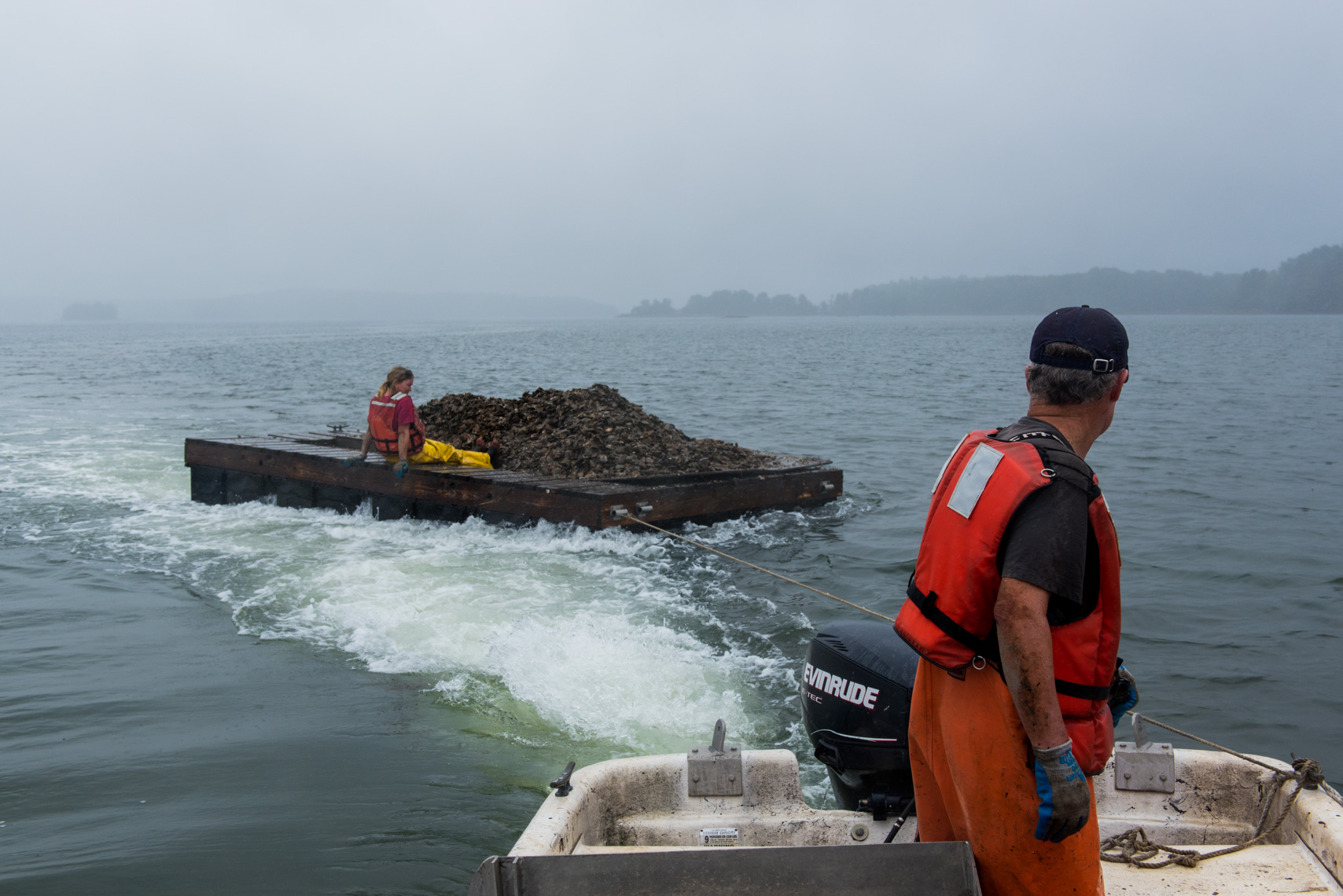 Towing Oysters out to their new home