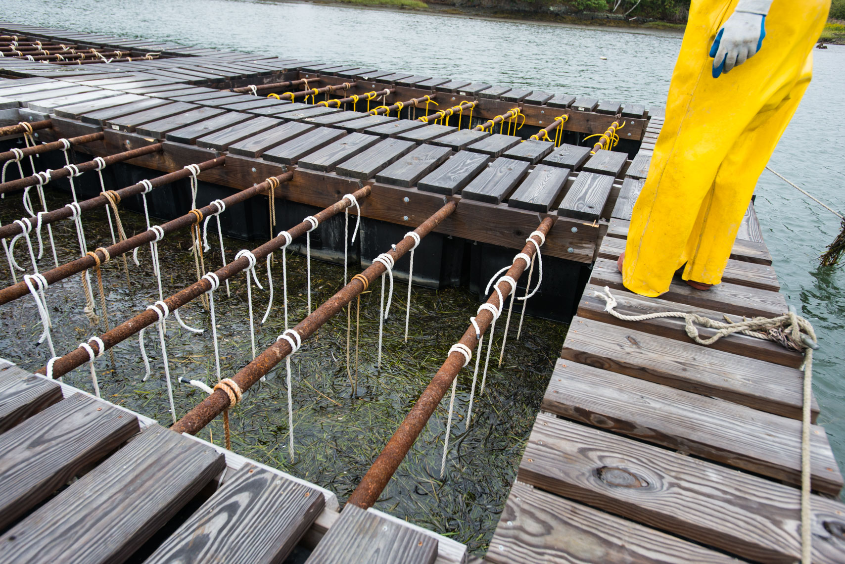 a dock made for growing oysters