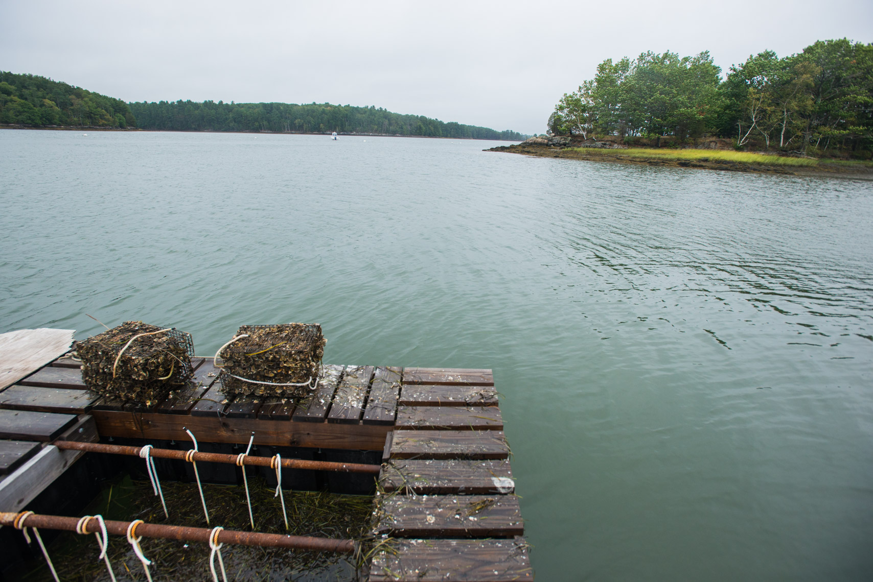 Dock used for growing oysters
