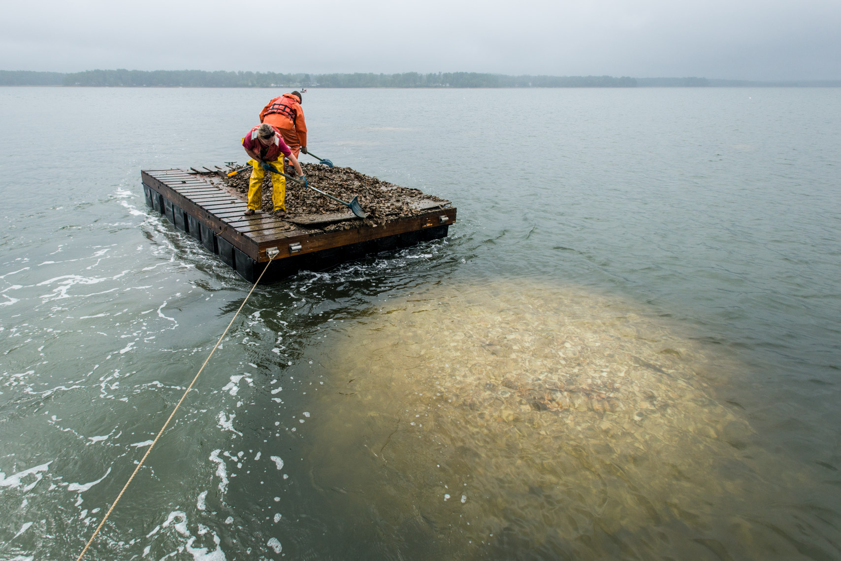 Oyster restoration project in New Hampshire