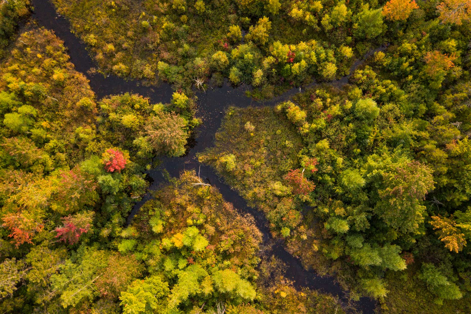 Aerial Photograph of a wetland in autumn